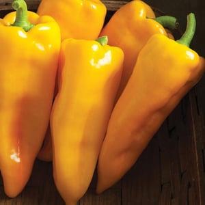Pepper_'Escamillo'.jpg
