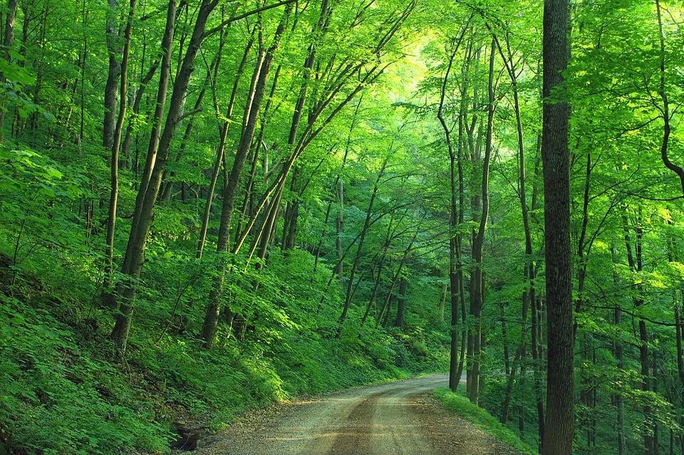 woods-1600782_960_720.jpg